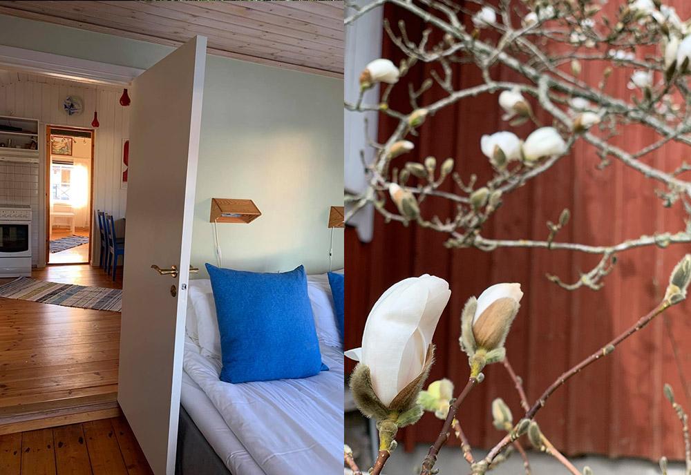 Genomsikt Mári och magnolian utanför